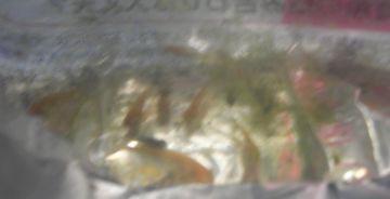 袋、藻混入